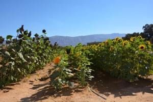 Introduction à l'agriculture en Israël
