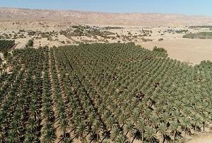 Agriculture dans le désert